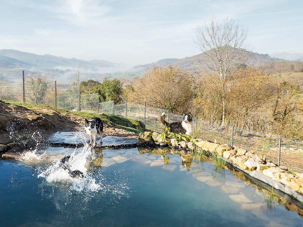 Parque de juegos para perros del hotel Canino La Torre en Cangas de Onís
