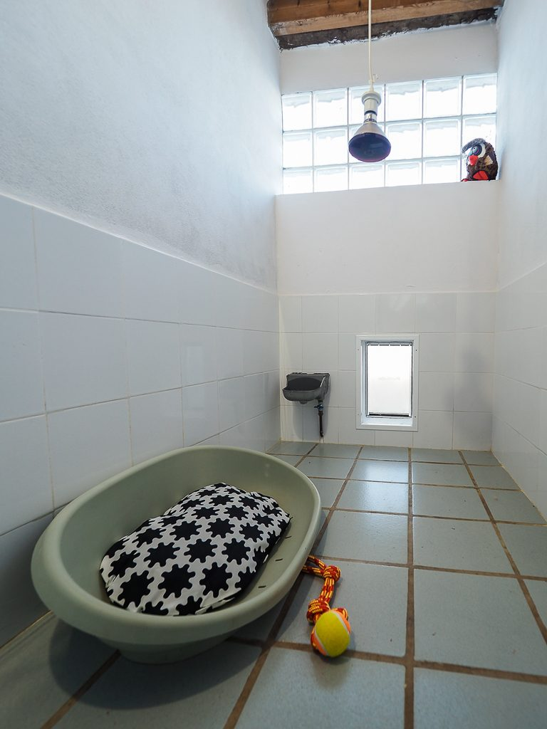 habitación la torre canina