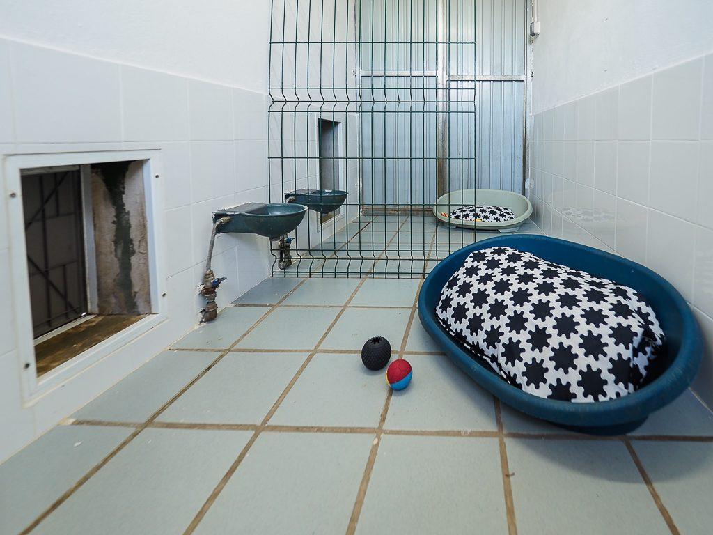 habitación residencia canina la torre